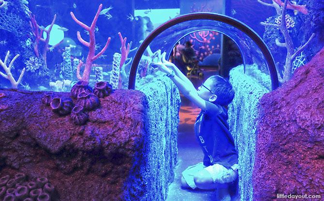 Coral Reef, SEALIFE Malaysia