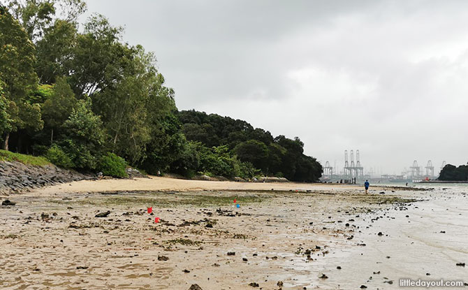 5 Reasons Why The Sentosa Siloso Headland Intertidal Walk At Tanjong Rimau Is Worth Your Time