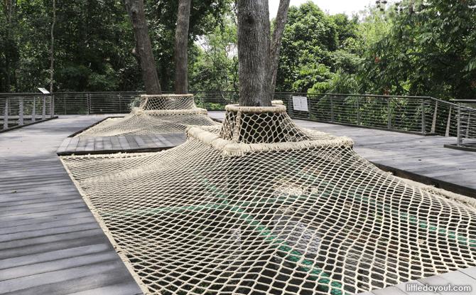 Canopy Web