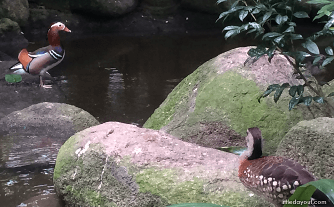 Birds of Asia - Favourite Spots at Jurong Bird Park