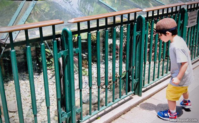 Animals at HK Zoo
