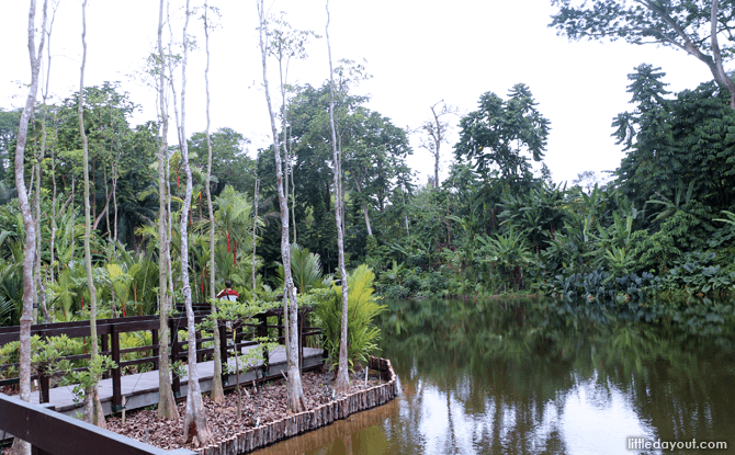 Pulai Marsh at Keppel Wetland