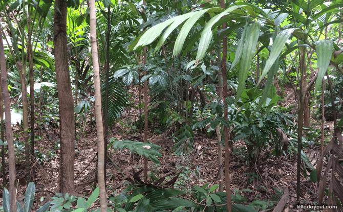 Our Rainforest (A Biodiversity Investigative Workshop)