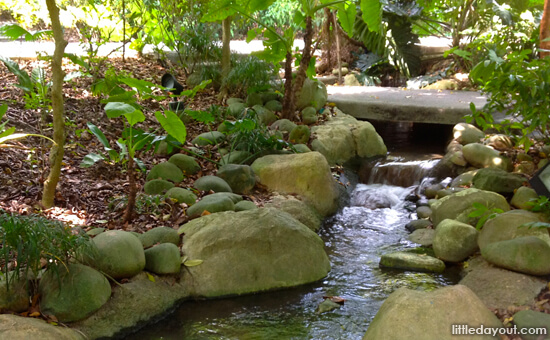 Saraca Stream