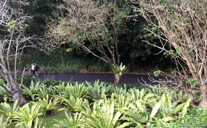 Slope at Singapore Botanic Gardens