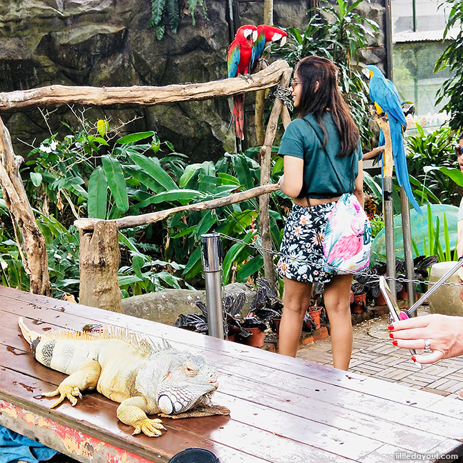 Animals Encounters, Butterfly Park, Sentosa