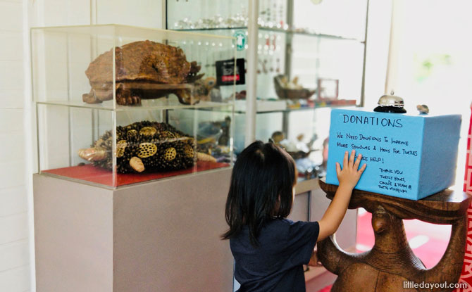 Visiting the Live Turtle and Tortoise Museum