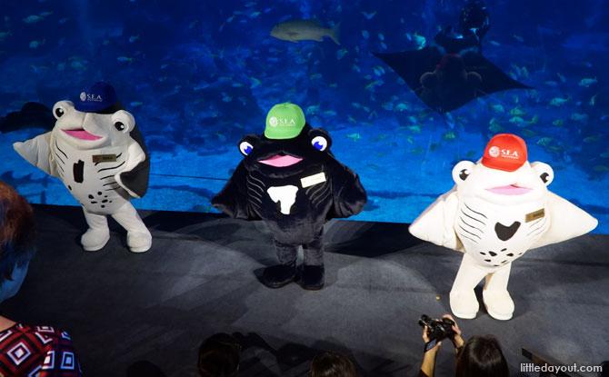 Interactive Activity at Ocean Fest 2019