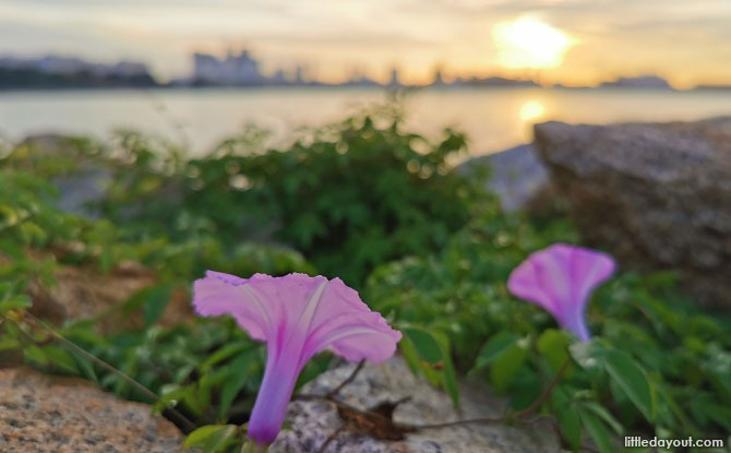 Things to see and do at Pandan Reservoir