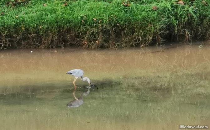 Flora and Fauna at Sungei Pandan Canal