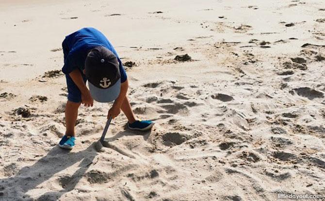 Clean up Beaches