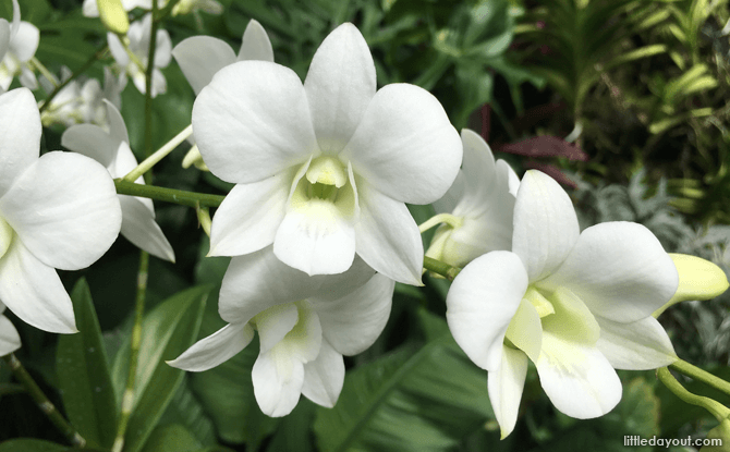 Orchid named after Princess Diana