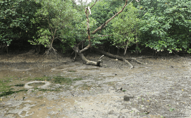 Mudflats, Sungei Buloh Mud Experience