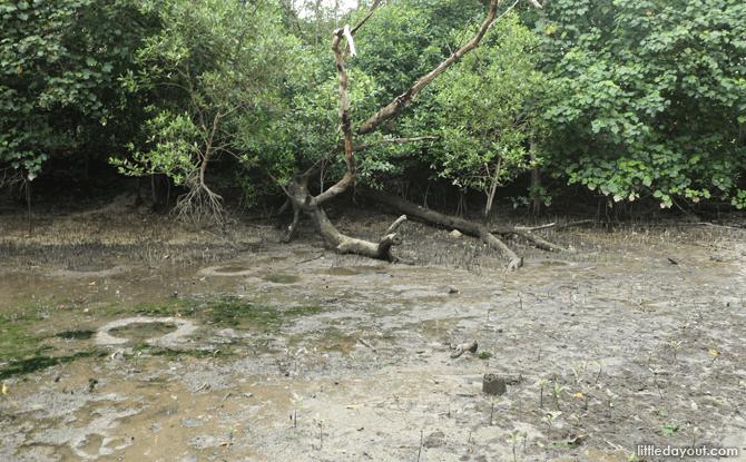 What's In My Mangrove? – 3 June 2017