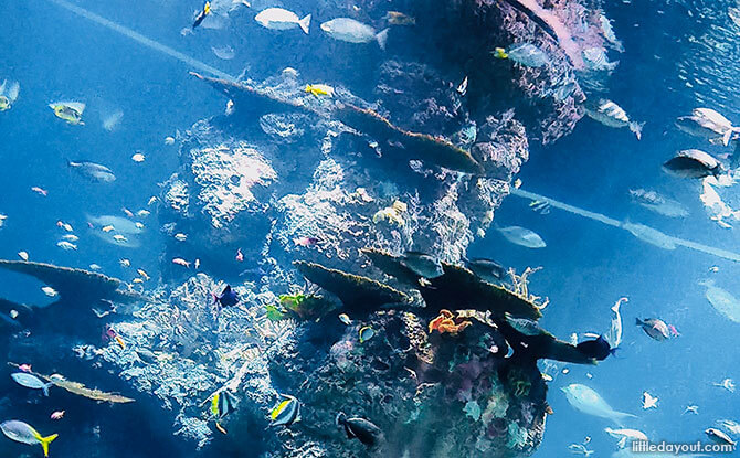 Quick Guide To Visiting S.E.A. Aquarium Singapore