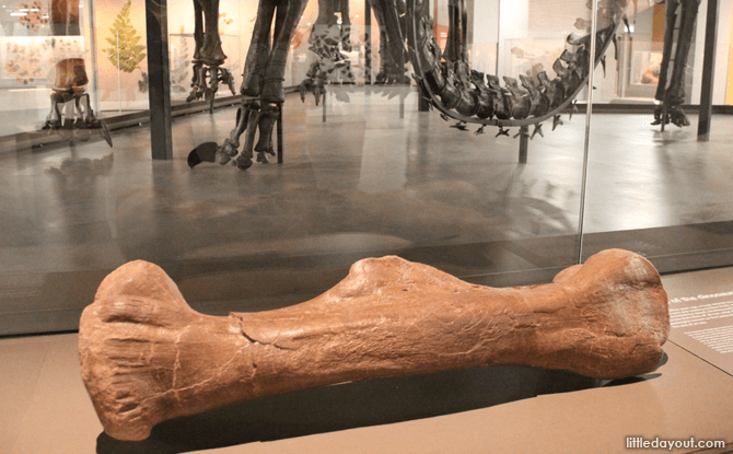 Dino Bone