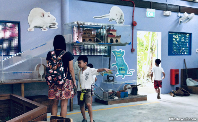 Interactive Animal Exhibits