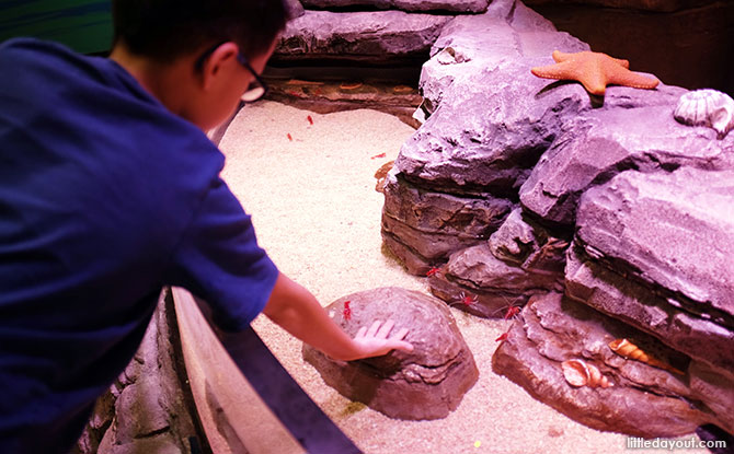 SEALIFE Aquarium's Rockpool