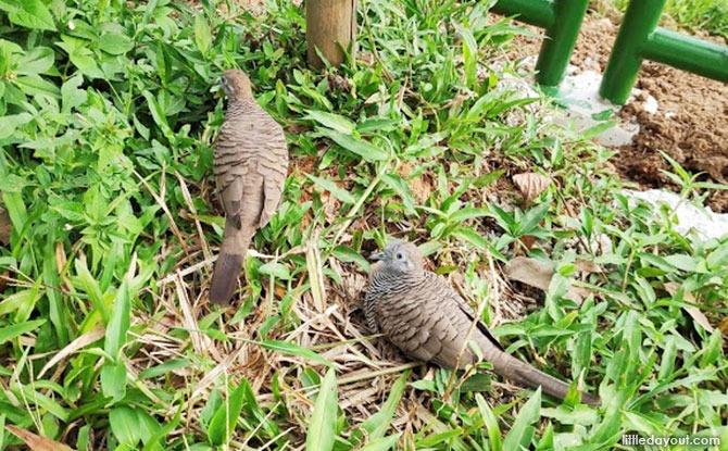 Birds at Ulu Pandan Park Connector