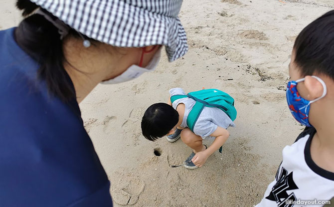 Ghost Crabs holes