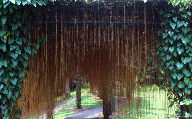 Curtain of Roots