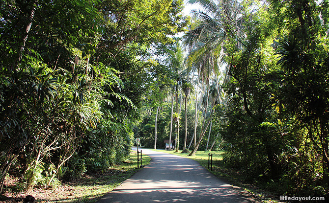 Pulau Ubin Chinese Kampong House: Road to Teck Seng's Place