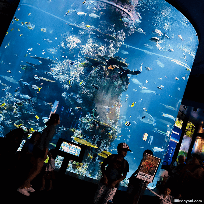 Visiting the SEA Aquarium at Resorts World Sentosa with Kids