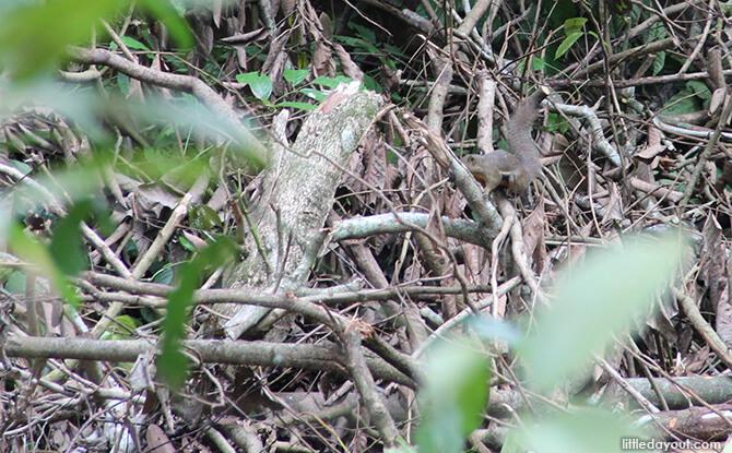 Windsor Nature Park: Squirrel