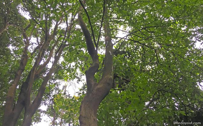 Tempinis Tree