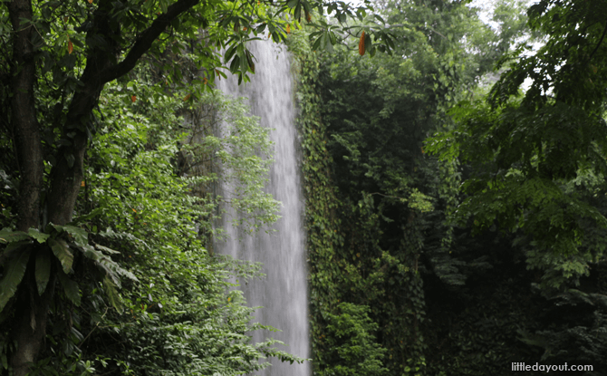 Waterfall Aviary