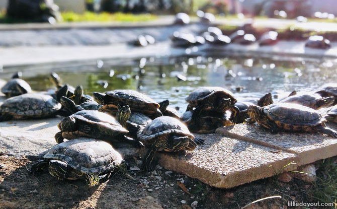 The Live Turtle and Tortoise Museum Reopen in Phase 2