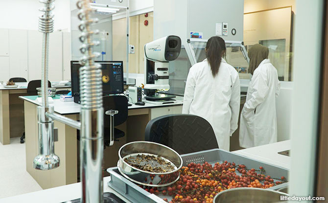 Lab at the Seed Bank