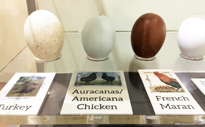 See how eggs of different sizes compare with each other.