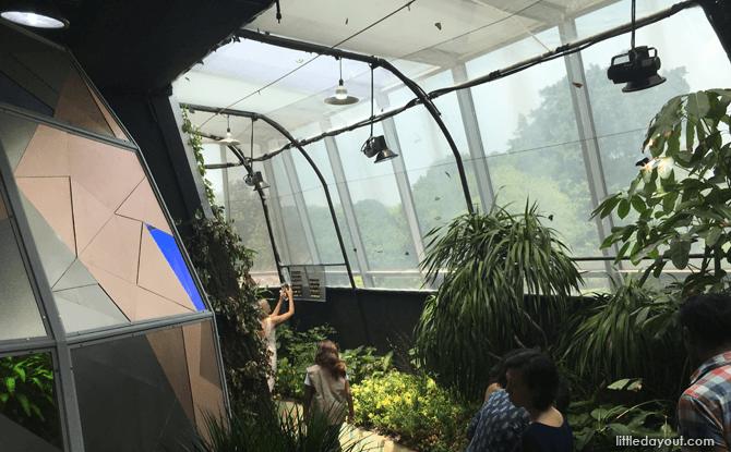 Butterfly Vivarium at Science Centre Singapore
