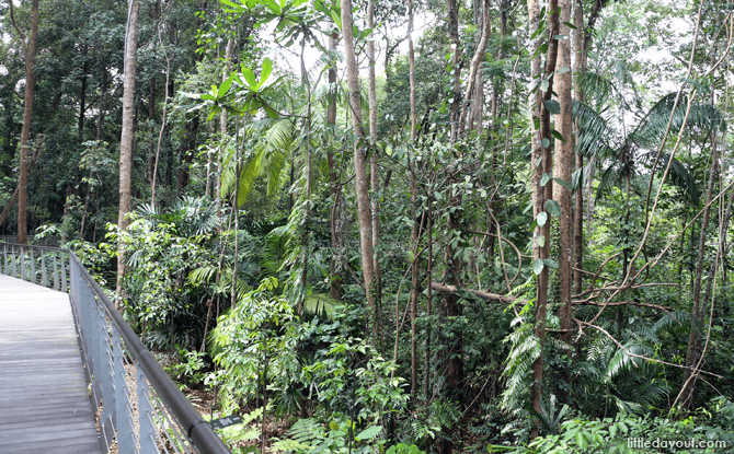 View of forest mid-level from the SPH Walk of Giants
