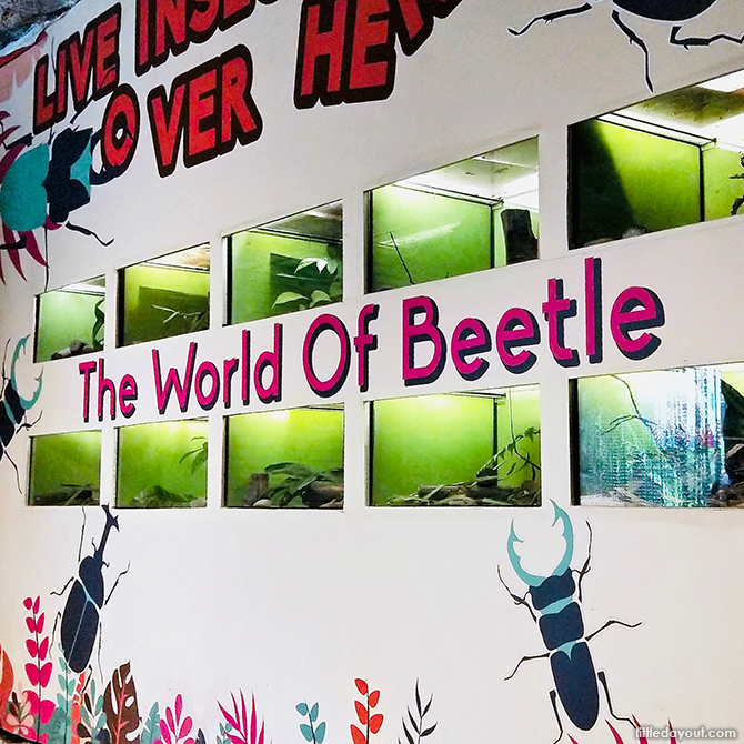 The World of Beetle