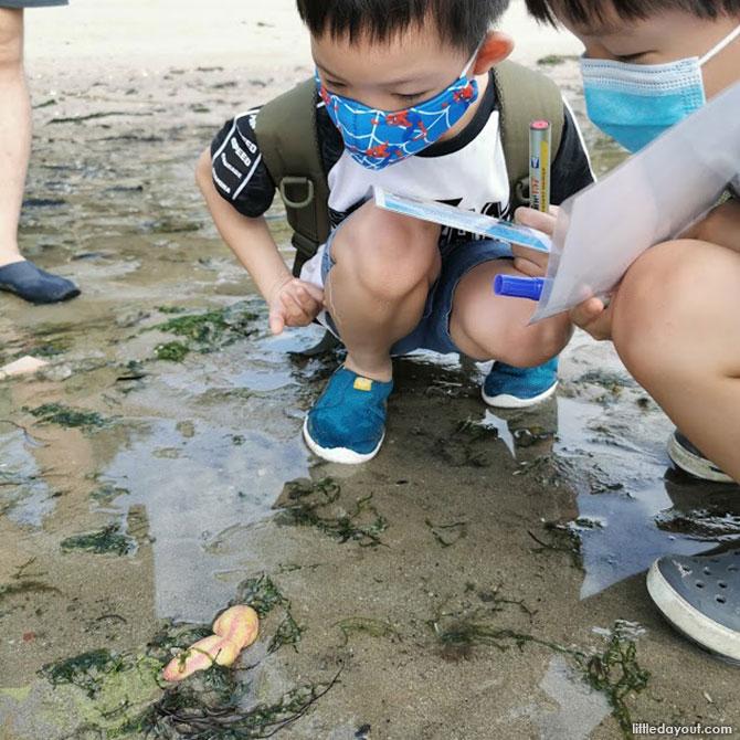 Warty Sea Cucumbers