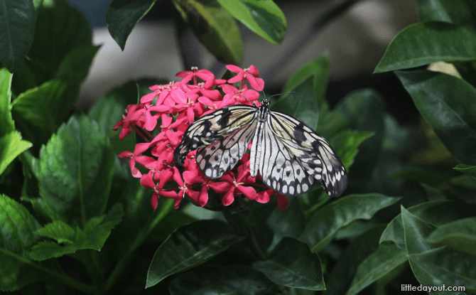 Butterflies at Science Centre Singapore
