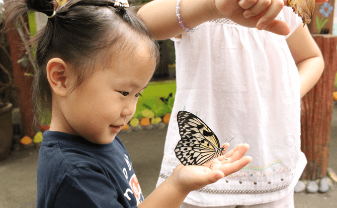 Have an encounter with nature at Butterfly Park & Insect Kingdom, Sentosa
