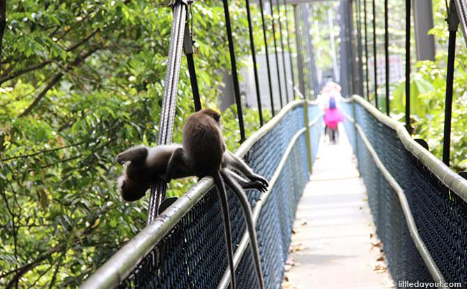 Treetop Walk - MacRitchie - Treks in Singapore