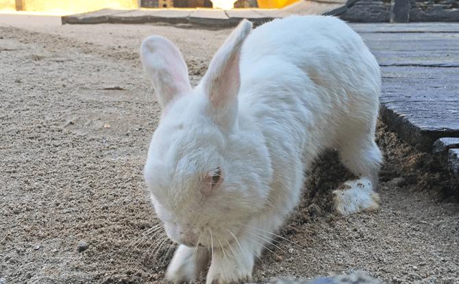 Rabbit Park