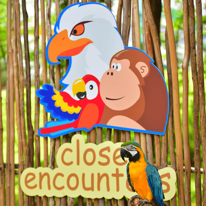 Bird & Animal Encounters, Sentosa