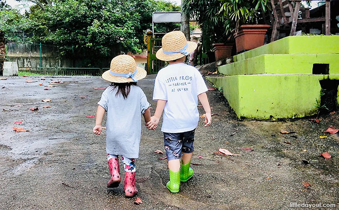 Get Croaking At Jurong Frog Farm