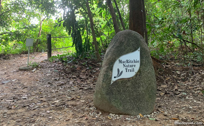 MacRitchie Reservoir Trail