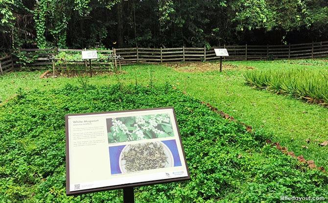 Plants at Ubin Sensory Trail