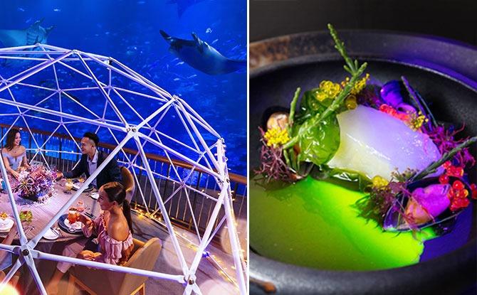 Aqua Gastronomy: Dine In The Company Of 100,000 Aquatic Creatures At S.E.A. Aquarium's Open Ocean Habitat