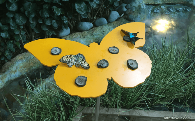 Butterfly feeding at Butterflies Up-Close