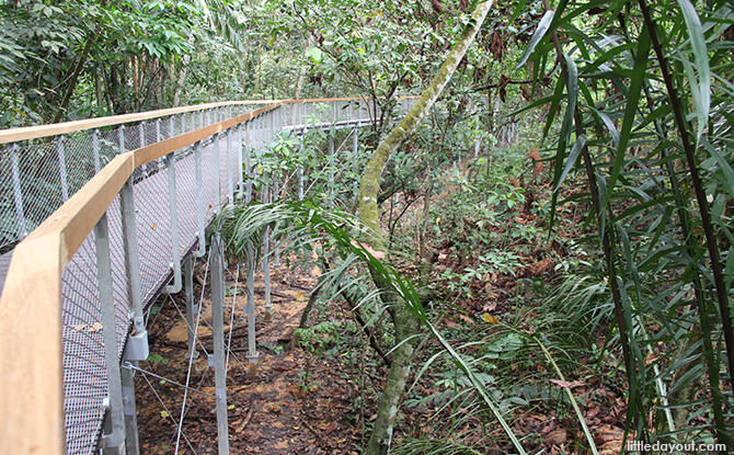 Windsor Nature Park's Drongo Trail Sub-canopy Walk