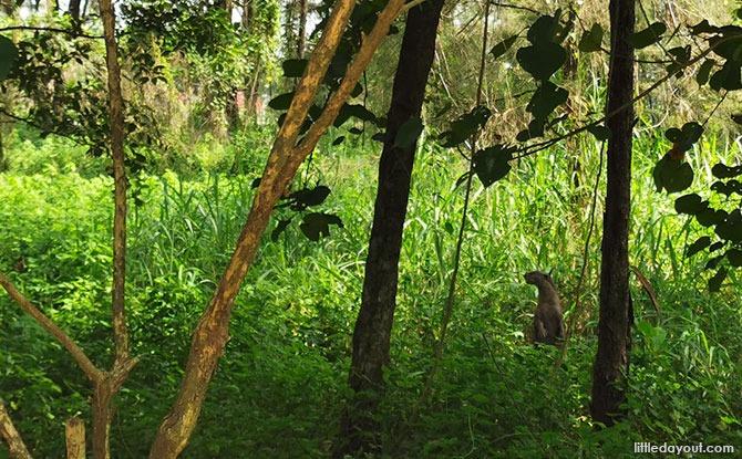 Punggol otter family