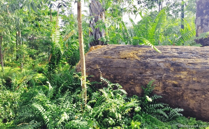Discovery, Gardens by the Bay